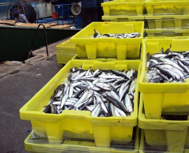 El ministerio mantiene abierta la pesquer a de la anchoa for Ministerio de pesqueria