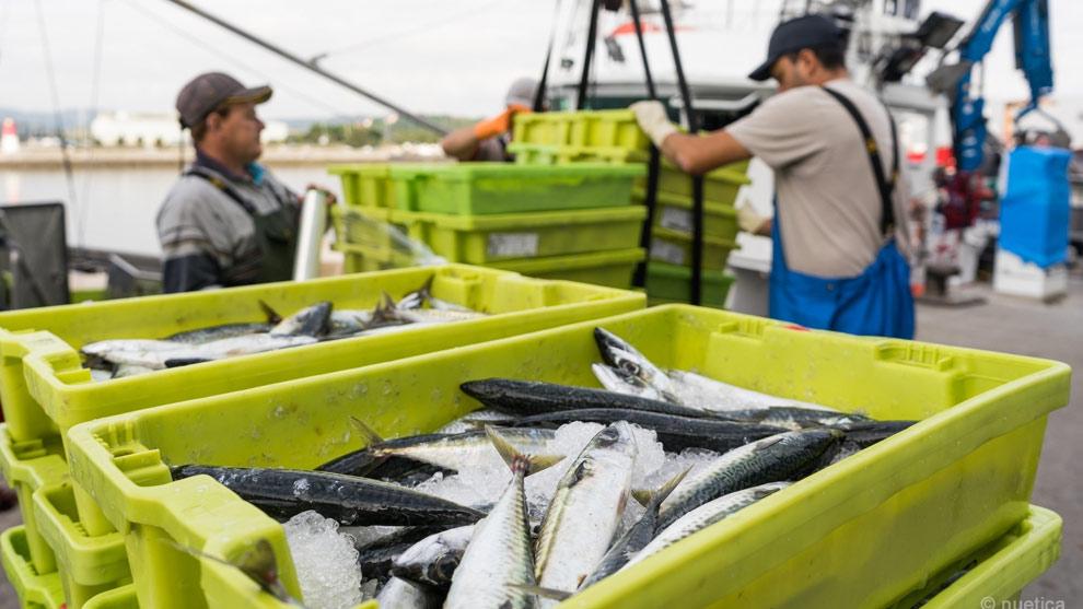 Aprobada por unanimidad la Ley de Pesca Marítima, Marisqueo y Acuicultura